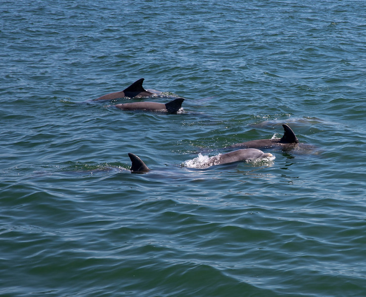 Dolphins-027