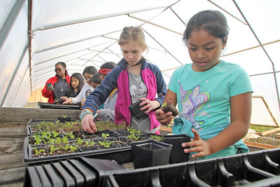 Students from local school districts visited the Allaire Community Farm located in Wall Township to take part in the SUSHI initiative which pairs students from affluent and disadvantaged towns to learn about gardening, nutrition and each other. Here Taylor Shapoutot (left) and Monse Tenoryo (right) both 4th graders work in transferring plants into planters in the hot house. (MARK R. SULLIVAN /THE COAST STAR)