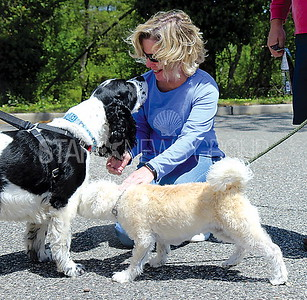 Wall Coldwell Banker Pet Adoption 5/6/2017: Margie Hosttler from Point Pleasant with rescue dog Wallage (Springer spaniel) and dog she is considering adopting, Remy (Schnauzer Poodle mix)