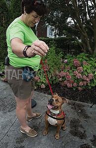 volunteer, grainne levine of howell, training tillie the dog.