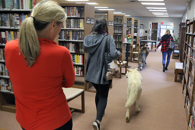Children get up close with Kotori and Samson wolf dogs from the Howling Woods Farm in Jackson that were on hand at the Brielle Public Library on Tuesday November 27, 2018. (MARK R. SULLIVAN/THE COAST STAR)