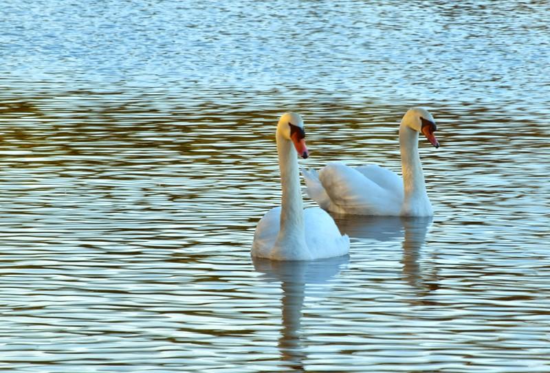 Savannah Swans, Georgia