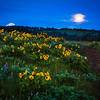 Pre-dawn lights balsamroot, lupine and Mt. Hood's tip under a full moon