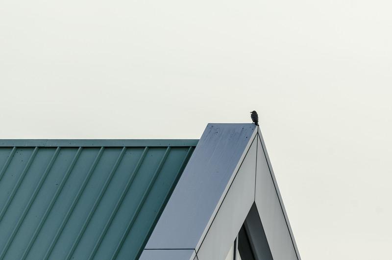 Bird on metal roof...