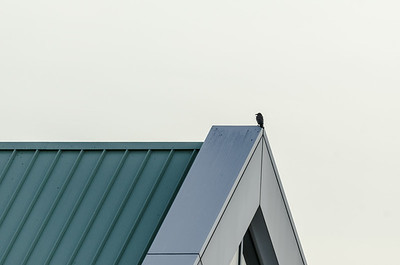 Bird on metal roof...