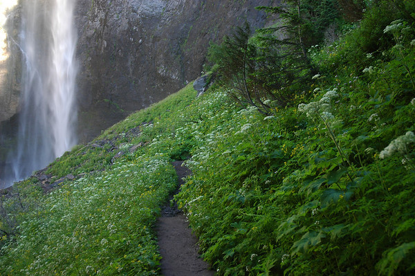 The trail passing by Comet Falls.