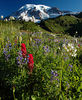 Paradise Meadows. This trail is from the upper parking lot at Paradise and it is about 2 miles round trip. The flowers are best in August.