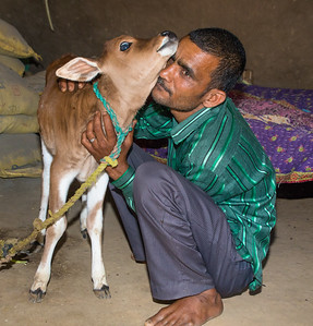 A farmer hugging his newborn calf, progeny of a cow received from TCF under their program to provide quality breed cows to farmers. With better stock, farmers can keep less cattle to deliver the same amount of milk, reducing pressure on the environment. In receiving the cow, a farmer also agrees to stock feed their livestock rather than allowing them to go into the forest to graze.
