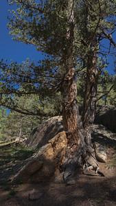 TheCrags-TreesNRock-02864