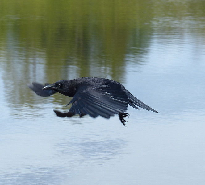 As the Crow Flies IV