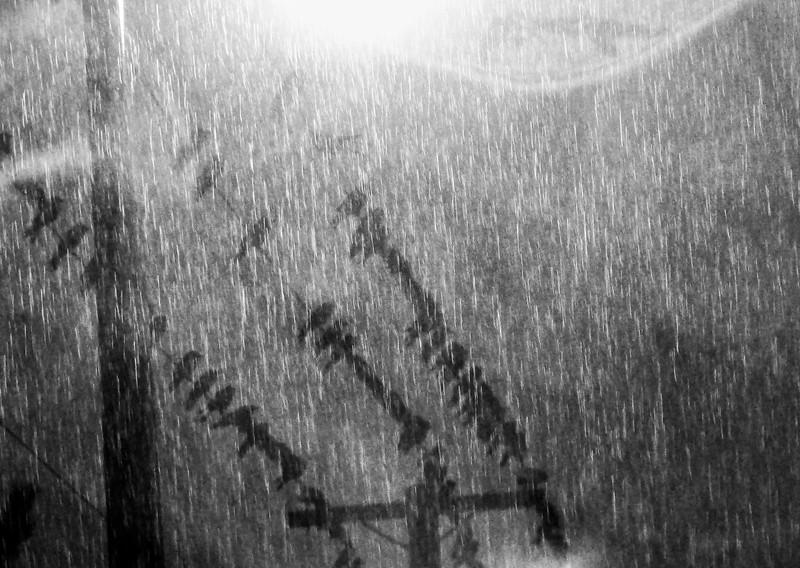 Rainy Roost