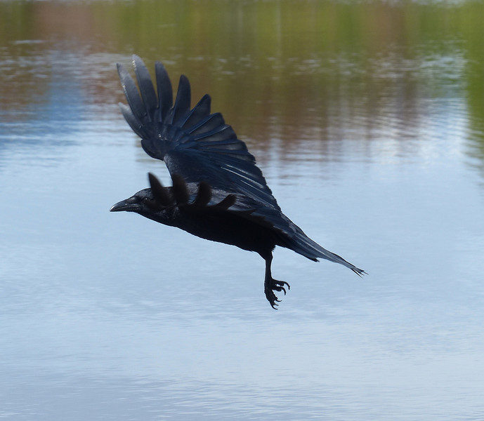 As the Crow Flies III