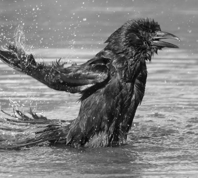 Water Joy II