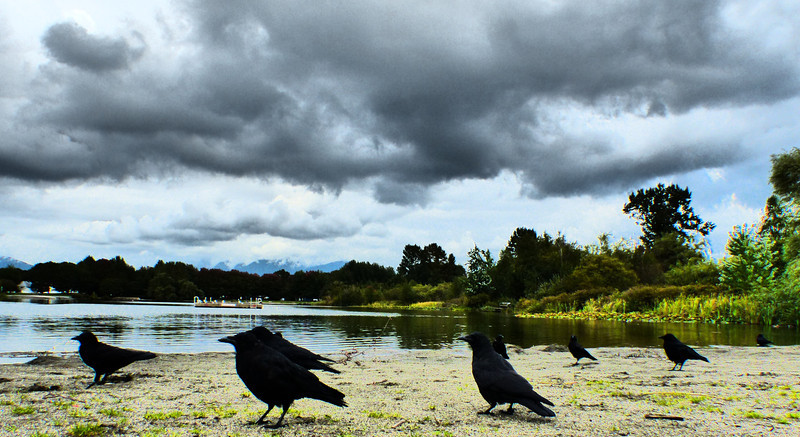 Storm-Watching Crows