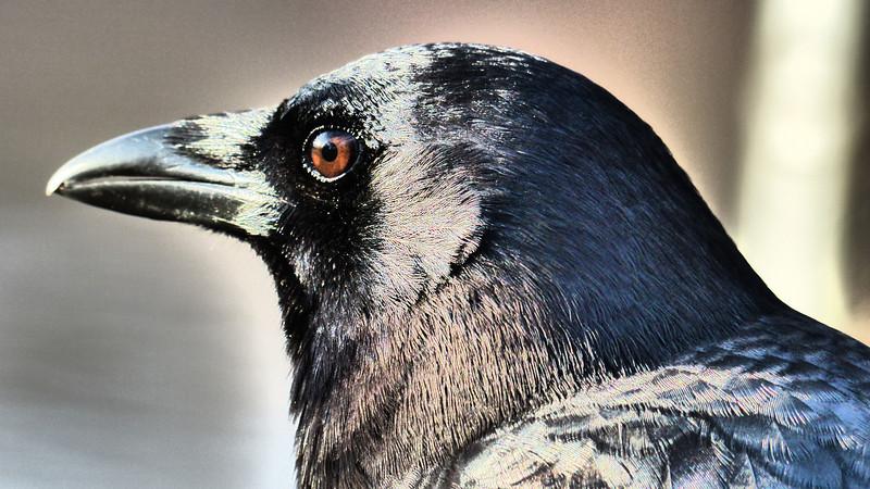 Feathered Mind