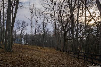 Pasture Trees II