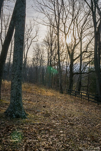 Fence Thru the Forest