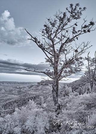 Withered Tree IR