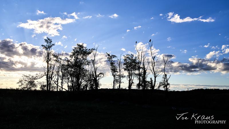 Lonely Trees II