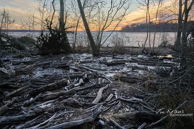 Swamp Sticks