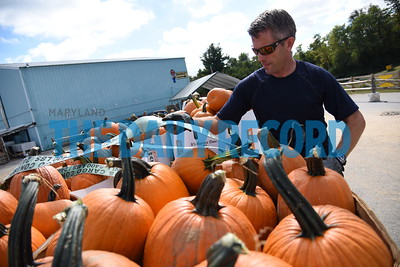 10-6-2016 Westminster, MD- Hugh Rodell, owner of Seasonal Evergreen, who contracts with the army and air force exchange service, is seen here picking up 17 bins of pumpkins from Baugher's Orchard in Westminster. He has been buying from Baugher's for the past 8 years and this shipment is going all the way to to Fort Myer and Fort Belvoir in Virginia to be setup in farm patches for military families to buy for the holidays. (The Daily Record/ Maximilian Franz).