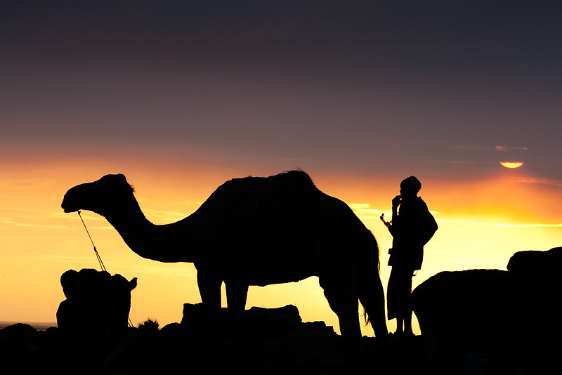 Dawn in Hamed Ela. The camel caravans are preparing for the trip to Lake Asale to pick up salt.