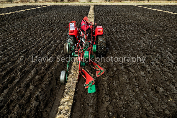 David Chavvell driving (blossom) his M/F 420 tractor at Selby ploughing match 5-4-2015