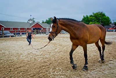 This horse gets a walk in with the  handler prior to a competition