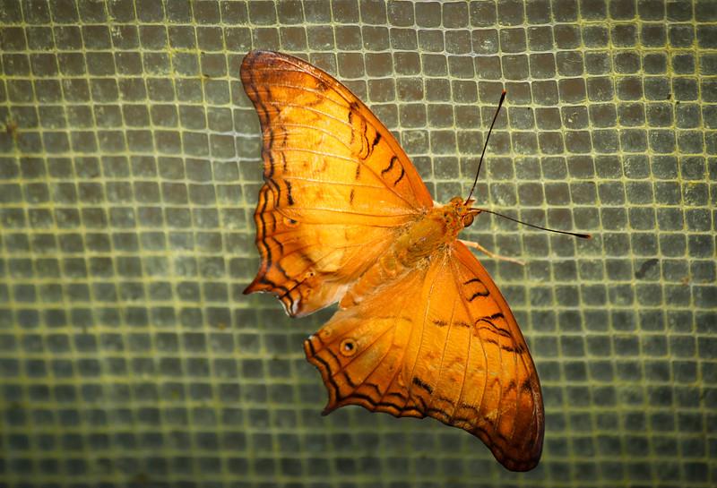 Orange Fragility