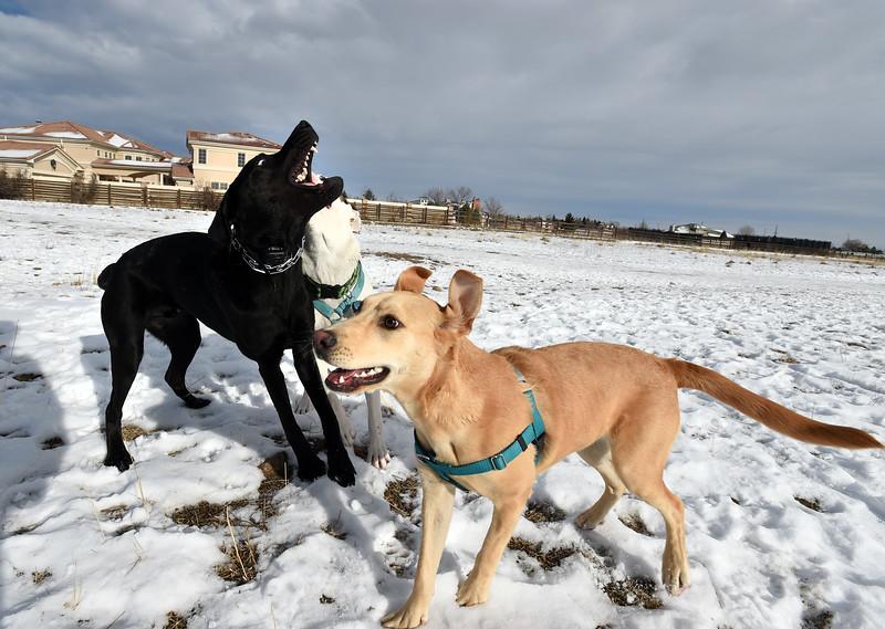 Louisville Dog Park