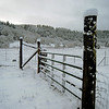 Snowy fence and pasture.