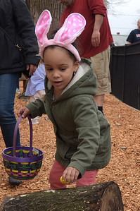 TIM JEAN/Staff photo  Isabella Medrano, 4, of Haverhill, picks up a plastic egg on a log during the Trinity Episcopal Church in Haverhill annual Easter Egg Hunt.  4/20/19