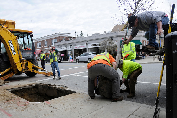TIM JEAN/Staff photo<br />   <br /> Members of Andover's Department of Municipal Services remove a Red Maple tree from a truck before planting it along Main Street during an Arbor day celebration.  4/27/18