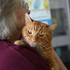 RYAN HUTTON/ Staff photo<br /> Woody, an eight-year-old tabby cat up for adoption at the MSPCA at Nevins Farm, is held by volunteer Pam Shaw.