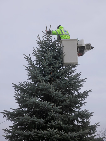 MIKE SPRINGER/Staff photo<br /> Scott Edgerly of the Haverhill Park and Tree Department works to secure a 35-foot blue spruce Christmas tree Wednesday at Washington Square in downtown Haverhill. The tree, donated by Coventa Energy of Haverhill, will be lit Friday night during the 27th annual Haverhill Christmas Stroll.<br /> 12/4/2019