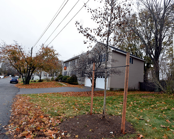 RYAN HUTTON/ Staff photo<br /> One of the city-planted trees recently placed near roads around the city which has many residents upset.