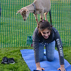 CARL RUSSO/Staff photo. Poppy the goat stands tall on Emily Serrano's, 13, back. She lives in Andover. <br /> <br /> Goat yoga class in the Andover Park Thursday night. The Andover Recreation Dept. held the event featuring baby goats from Chip-in Farm in Bedford Ma. 9/19/2019
