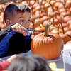 TIM JEAN/Staff photo<br /> <br /> Alex Finocchiaro, 4, is excited to decorate a pumpkin with paint during the second annual Methuen Day in downtown Methuen.   10/5/19