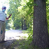 TIM JEAN/Staff photo<br /> <br /> Pike Messenger points out the Shagbark Hickory Trees along King St., while walking along the Target Common Landmark Trail. The trail is organized around historic and natural features in Middleton. 7/21/20