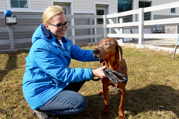 TIM JEAN/Staff photo <br /> <br /> Julia Pesek, Community Outreach Coordinator at the MSPCA at Nevins Farm in Methuen, shows off Fancy-Carrie, 4, year old female Redbone Coonhound is one of three dogs and 15 goats awaiting new homes at the MSPCA in Methuen. The animals are from a woman who was arrested for hoarding animals at her home in Freetown, Mass.   2/12/20