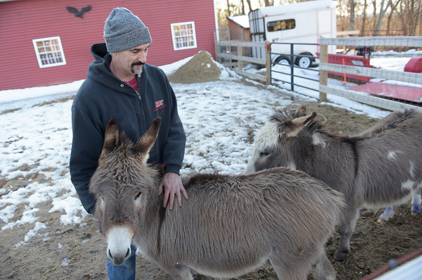 TIM JEAN/Staff photo <br /> <br /> Jeff Caira with his two donkeys named Daisy, left, and Levi at his home on Bush Hill Road in Pelham, NH.  Caira is one of several property owners that was threatened when an ordinance was approved last year not allowing livestock on residential properties of under 3 acres in town. 2/19/20