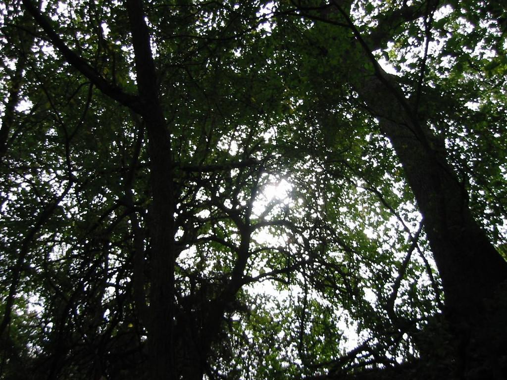 08-WoodsSun