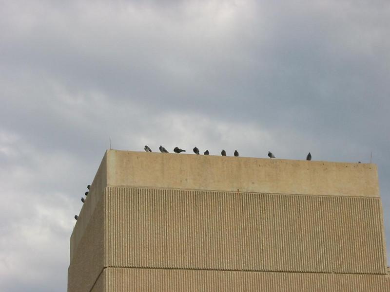 13-Birds