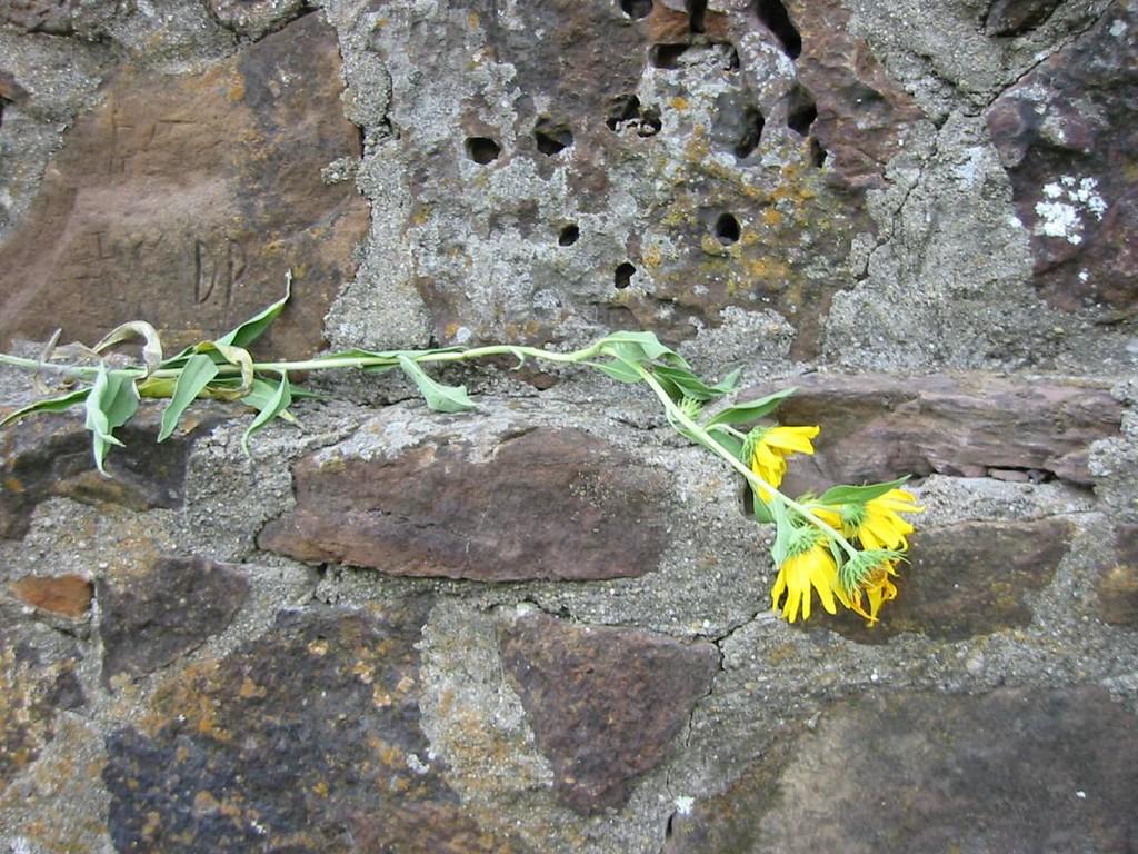 08-Flower