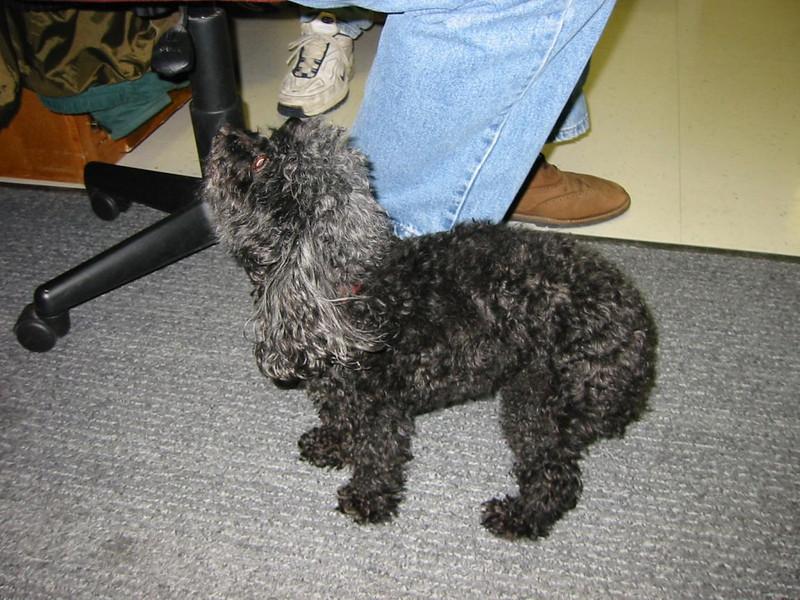 17-Puppy