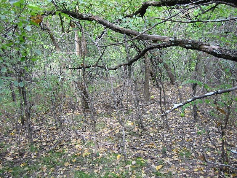 08-Woods