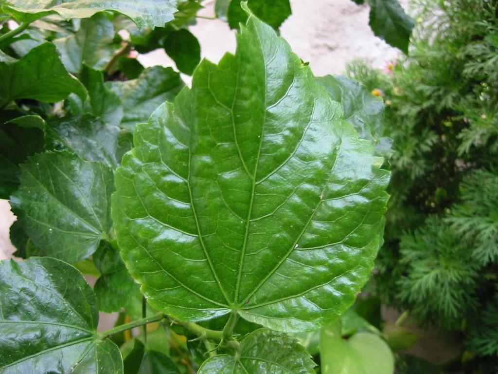 09-Leaf2