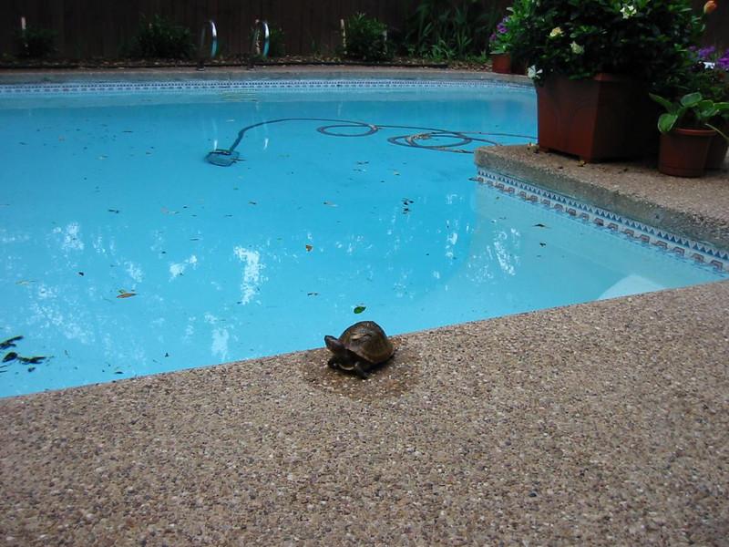 12-Turtle