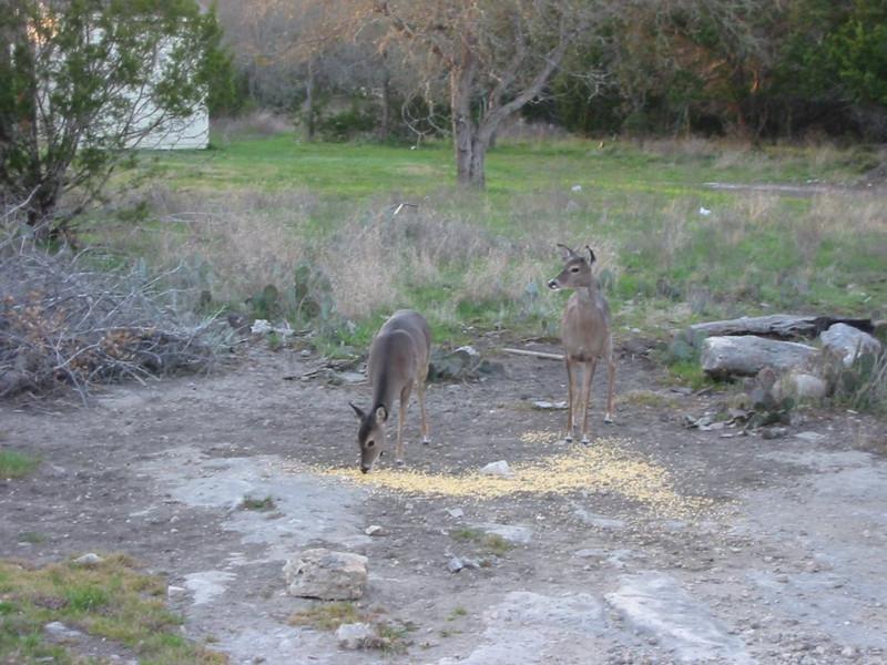 9-Deer