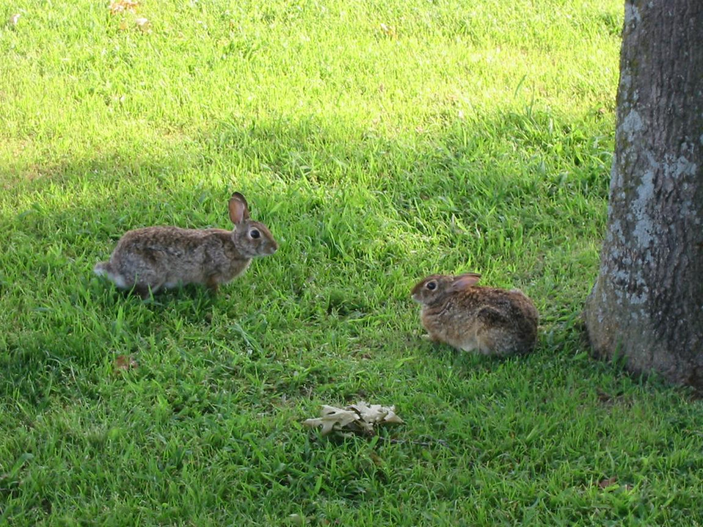 1-Rabbits!